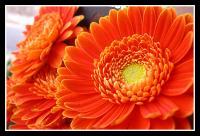 Blomst2